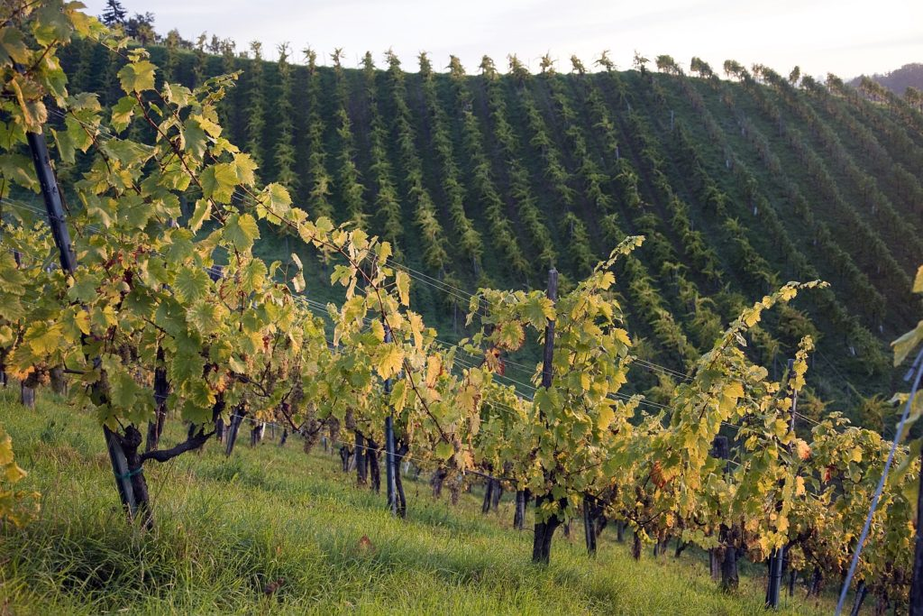 Unsere Lagen in der Südsteiermark, Weingut Tauss, Leutschach